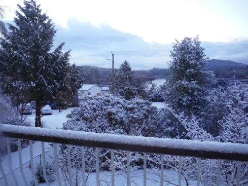 A rare winter snowfall